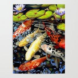 Koi & Waterlilies Poster