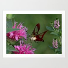 Hummingbird Hawk-Moth Art Print