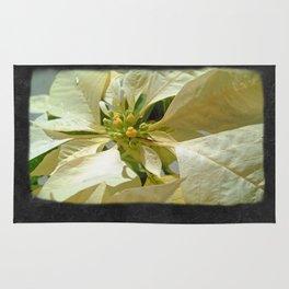 Pale Yellow Poinsettia 1 Blank P4F0 Rug
