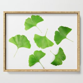 Green Ginkgo Biloba Isolated On White Background Serving Tray