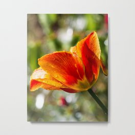 Wet Orange And Yellow Tulip Metal Print