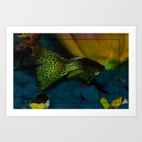 grassy guppy male Art Print