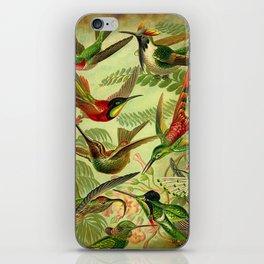 HUMMINGBIRD COLLAGE- Ernst Haeckel iPhone Skin