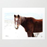 Horse Stud Art Print