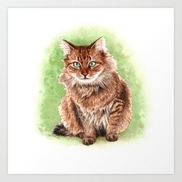 Somali cat portrait Art Print