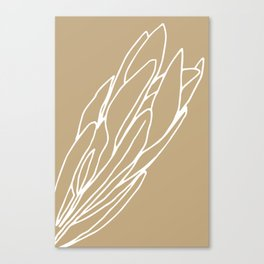 Protea Toffee Canvas Print