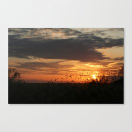 sunset and birds Canvas Print