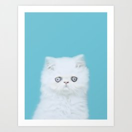 Lord Aries Cat - Photography 001 Art Print