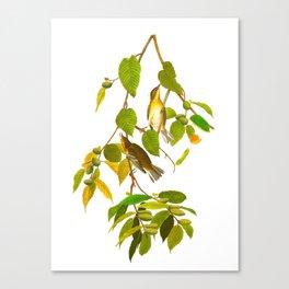 Autumnal Warbler Bird Canvas Print