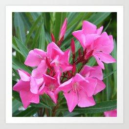 Pink Oleander Bouquet Closeup  Art Print