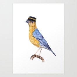 Orange-headed thrush Art Print