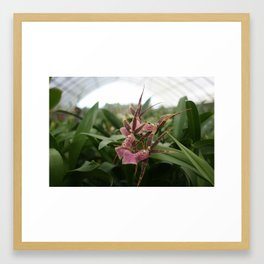 Orchid Farm Framed Art Print