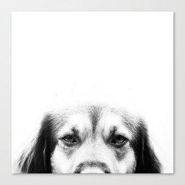 Dog portrait in black & white Canvas Print
