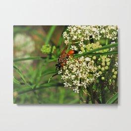 Wasp 1794 Metal Print