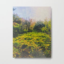 Haze forest Metal Print