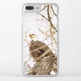 Bald Eagle Perched in Tree Clear iPhone Case