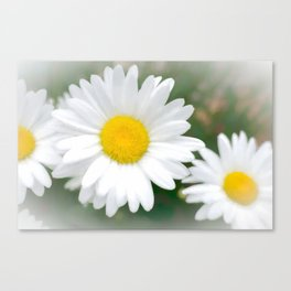Daisies flowers in painting style 1 Canvas Print