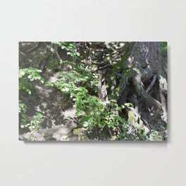 Roots and a tree 1 Metal Print
