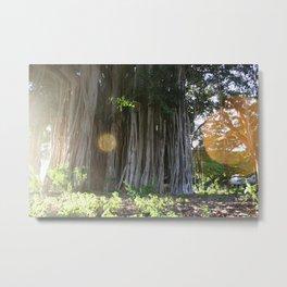 Into the Banyan Tree 2 Metal Print