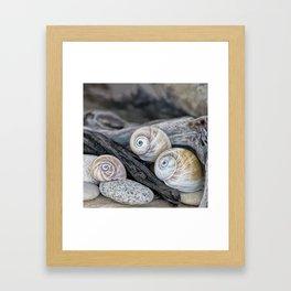 Shark's eye shells and driftwood Framed Art Print