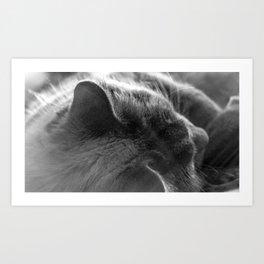 The Cat 5 Art Print
