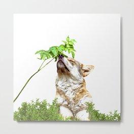 Wolf I (Animal Collection) Metal Print
