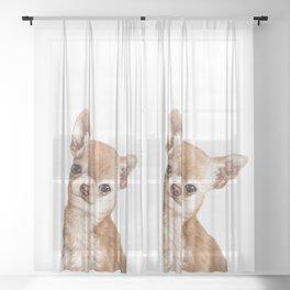 Chihuahua Sheer Curtain