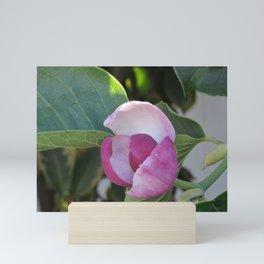 A Fig Prefigured Mini Art Print