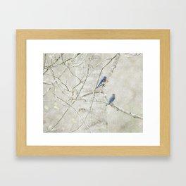 Bluebirds in Spring Framed Art Print