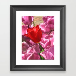 Prima Donna Among The Tulips Framed Art Print