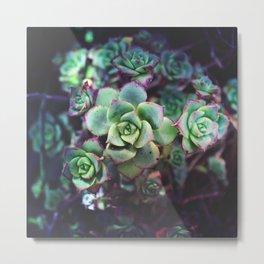 lil succulent Metal Print