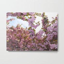Sakura Matsuri Metal Print
