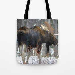 Massive male moose on the loose in Jasper National Park Tote Bag