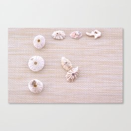 Urchins and seashells nautical design on textured background. Canvas Print