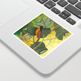 Baltimore Oriole on Tulip Tree, Vintage Natural History and Botanical Sticker