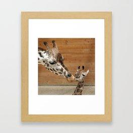 Giraffe 002 Framed Art Print
