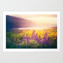 Columbia Gorge Wildflowers Art Print