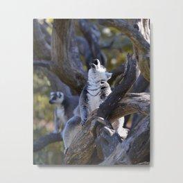 Lemur Howl Metal Print