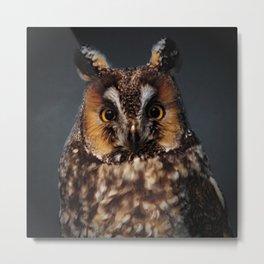 The Long-eared Owl Metal Print
