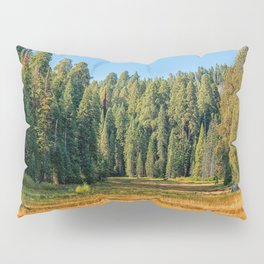 Photos USA Sequoia and Kings National Park Spruce Nature Parks forest Grass park Forests Pillow Sham