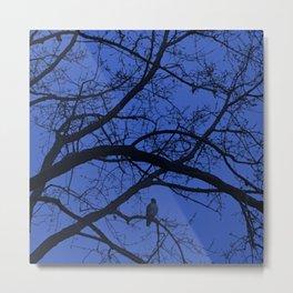Hawk in Tree Metal Print