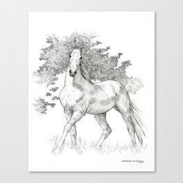 Saddlebred Horse Canvas Print