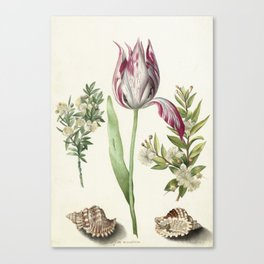 Tulip, two Branches of Myrtle and two Shells Canvas Print