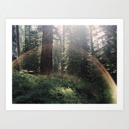 Fairytale Forest - Yosemite Art Print