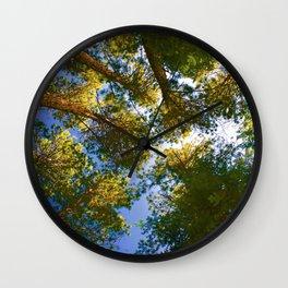 Pinus resinosa Wall Clock