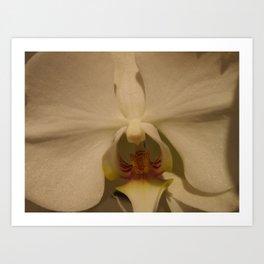 Orchid II Art Print