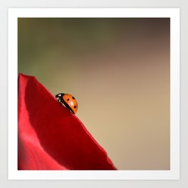 Ladybug on a Rose Art Print