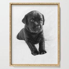 Black labrador puppy Serving Tray