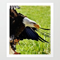 Eagle action Art Print