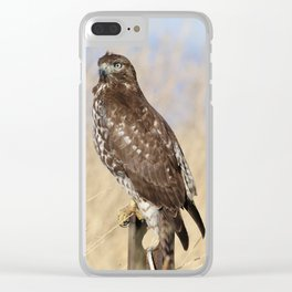 Red Tailed Hawk Clear iPhone Case